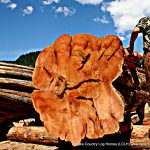 One of the Western Red Cedar logs used in homes built by Lake Country Log Homes in British Columbia, Canada.