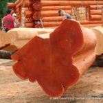 Flared Character Butt Western Red Cedar Log