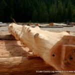 Western Red Cedar Log Rafter For a Home being built at our yard in BC for Clients in Colorado